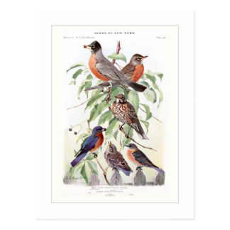 Robin and Bluebird Postcard