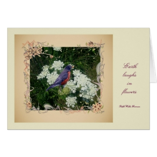 Robin and Queen Ann's Lace Note cards