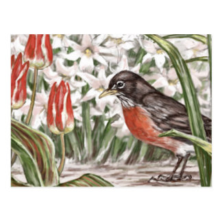 Robin and Red Tulips Spring Flowers Painting Postcard