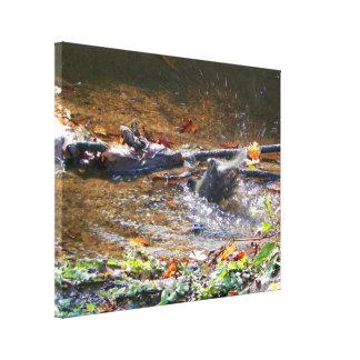 Robin Bathing in a Stream Photograph Canvas Print