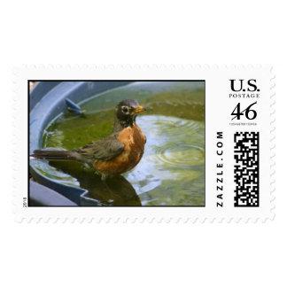 Robin Bathing Postage