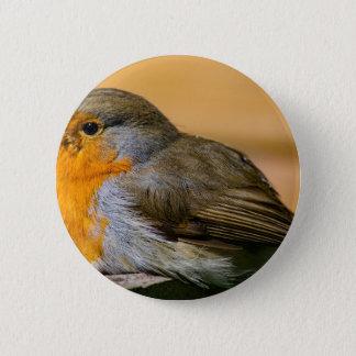 Robin bird on fence. button