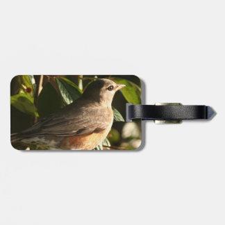 Robin Bird Wildlife Animal Photography Bag Tag