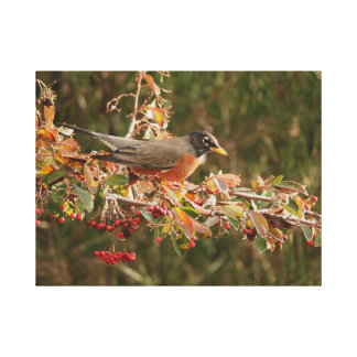 Robin Bird Wildlife Animal Photography Canvas Print