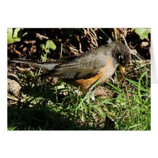Robin Bird Wildlife Animal Photography Card