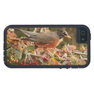 Robin Bird Wildlife Animal Photography Case For iPhone SE/5/5s