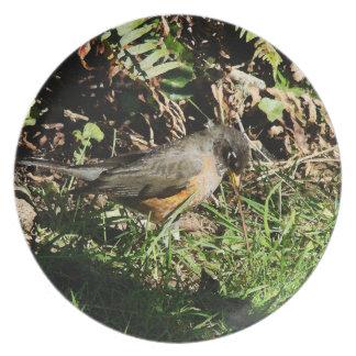 Robin Bird Wildlife Animal Photography Dinner Plate