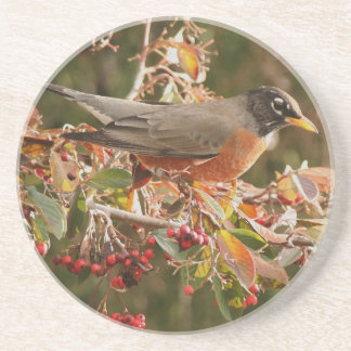 Robin Bird Wildlife Animal Photography Drink Coaster