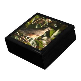Robin Bird Wildlife Animal Photography Gift Box