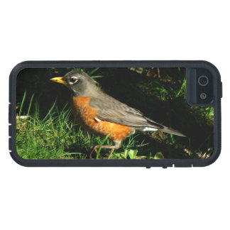 Robin Bird Wildlife Animal Photography iPhone SE/5/5s Case