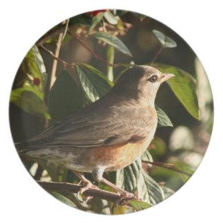Robin Bird Wildlife Animal Photography Melamine Plate