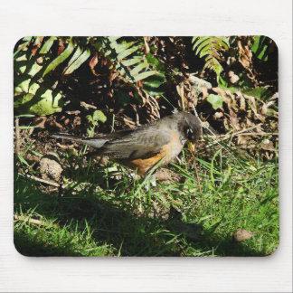 Robin Bird Wildlife Animal Photography Mouse Pad