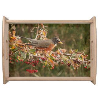 Robin Bird Wildlife Animal Photography Serving Tray