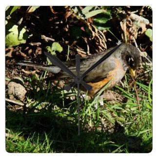 Robin Bird Wildlife Animal Photography Square Wall Clock