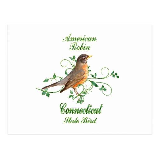 Robin Connecticut State Bird Post Card