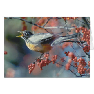 Robin eating berry card