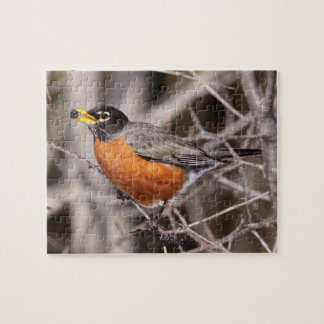 Robin Eating Puzzle