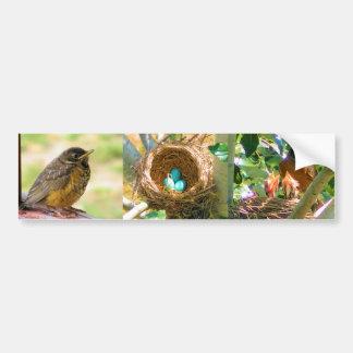 Robin Eggs in a Backyard Tree Nest Bumper Sticker