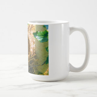 Robin eggs unhatched in a backyard tree nest mugs