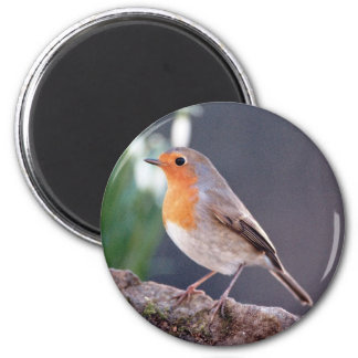 Robin - Erithacus rubecula 2 Inch Round Magnet