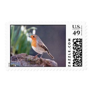 Robin - Erithacus rubecula Postage