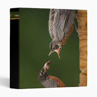 robin feeding 3 ring binders