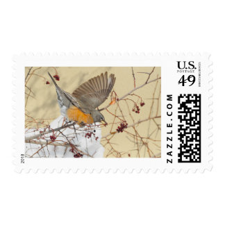 Robin First Class Postage
