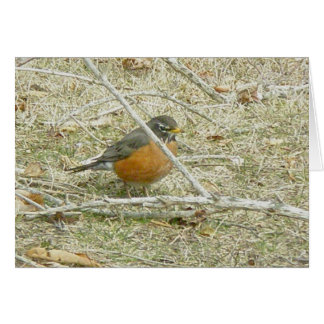 Robin Harbinger of Spring Card