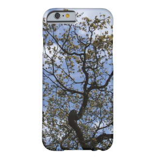 Robin Hood's Major Oak Tree Barely There iPhone 6 Case