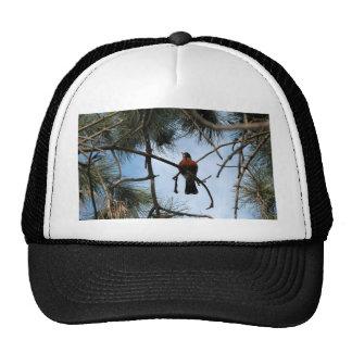 Robin in a pine tree trucker hats
