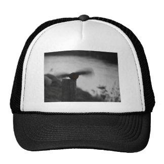 Robin in air trucker hat