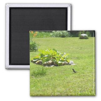 Robin in Backyard Summer Scene 2 Inch Square Magnet