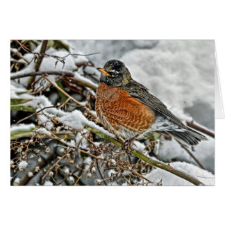 Robin in Snow Greeting Cards