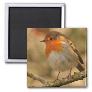 Robin in sunshine 2 inch square magnet