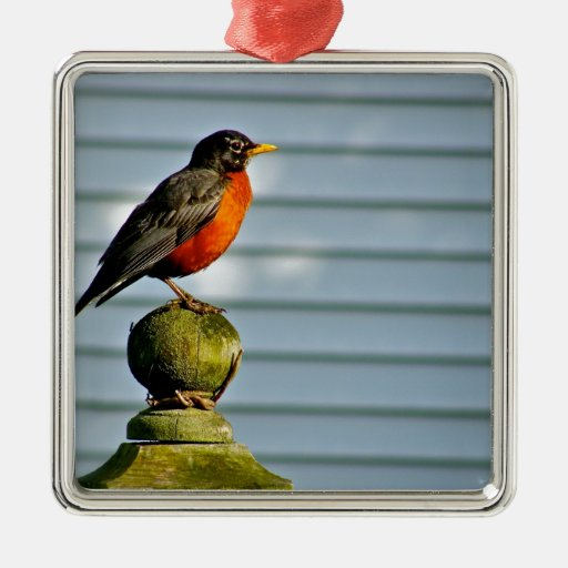 Robin in the BAckyarad Christmas Ornament