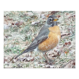 Robin in the grass 20 by 16 print
