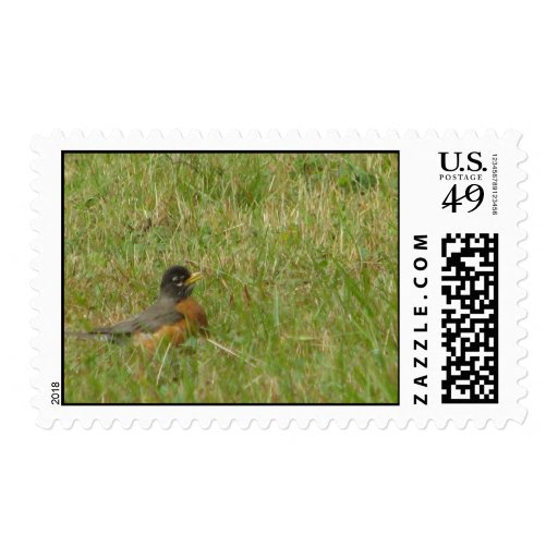 Robin in the Grass Postage