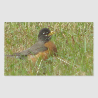 Robin in the Grass Rectangular Stickers