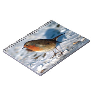 Robin in the Snow Notebook