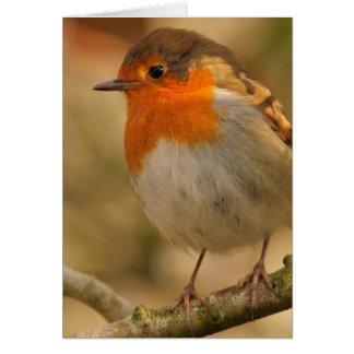Robin in the Sunshine Greeting Card