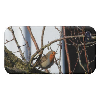 robin in the tree covers for iPhone 4