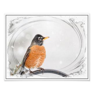 Robin in the winter photo