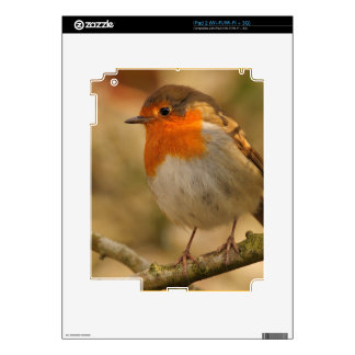 Robin in Winter Sunshine Decal For The iPad 2