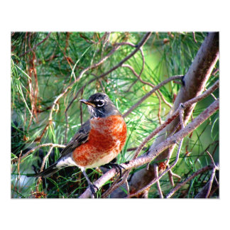 Robin is a girls name what a beautiful girl photographic print