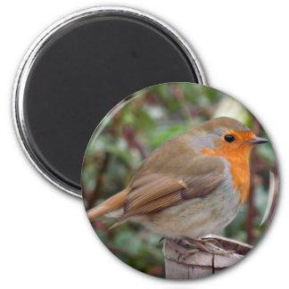 Robin Fridge Magnets