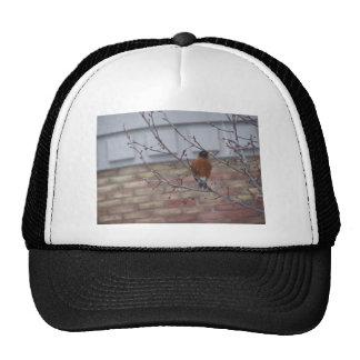 Robin Mesh Hats