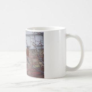 Robin Mugs
