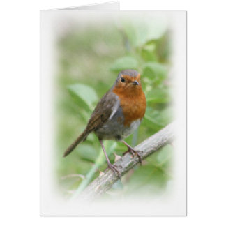 Robin on a branch card