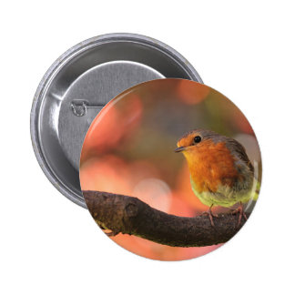 Robin on a branch pinback button