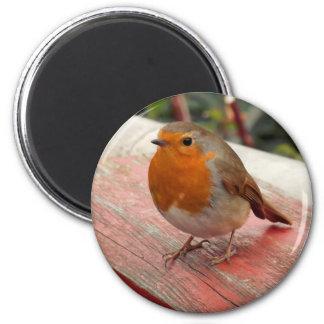 Robin on a Bridge Magnet